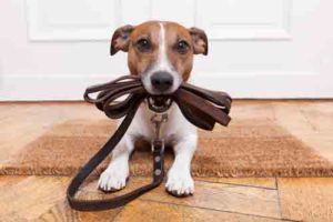 dog leash fish oil