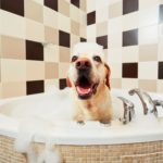 Dog vitamins and dog baths