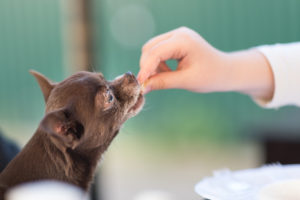 what vitamins do dogs need