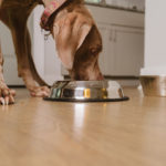 Dog food choices and best