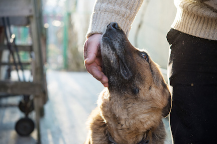 Dog ownership and health