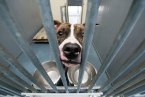 How to adopt a dog from a shelter