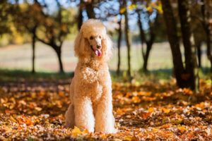 Hypoallergenic Dogs: A Guide For People With Dog Allergies