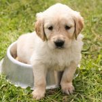 choosing the right dog breeder