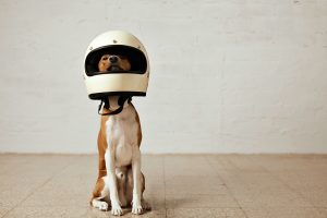 dog proof your home