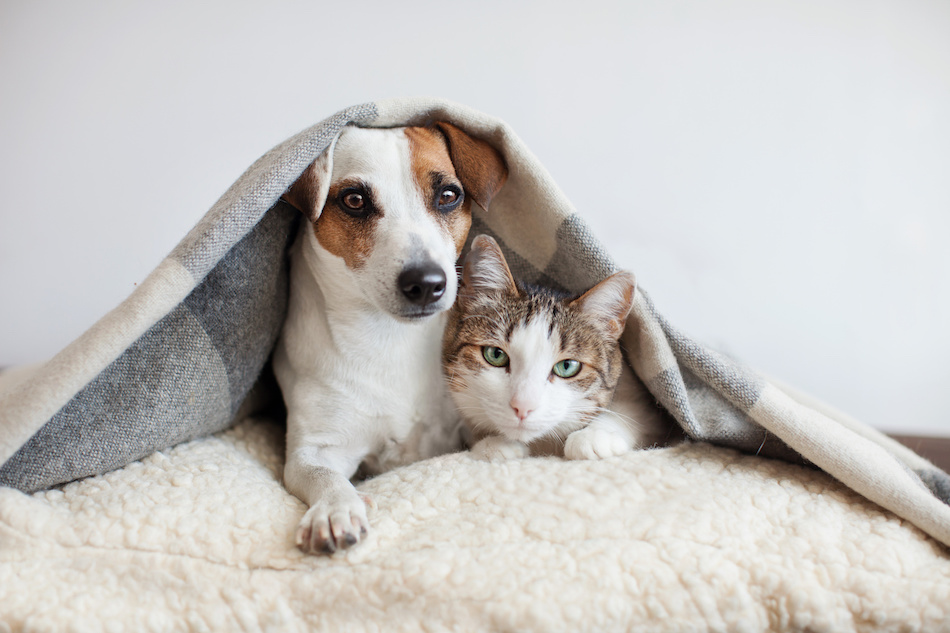Pets Hiding During Disaster