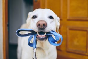 dogs-need-leashes
