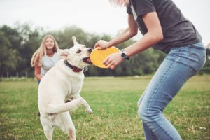play-with-dog-is-good-exercise