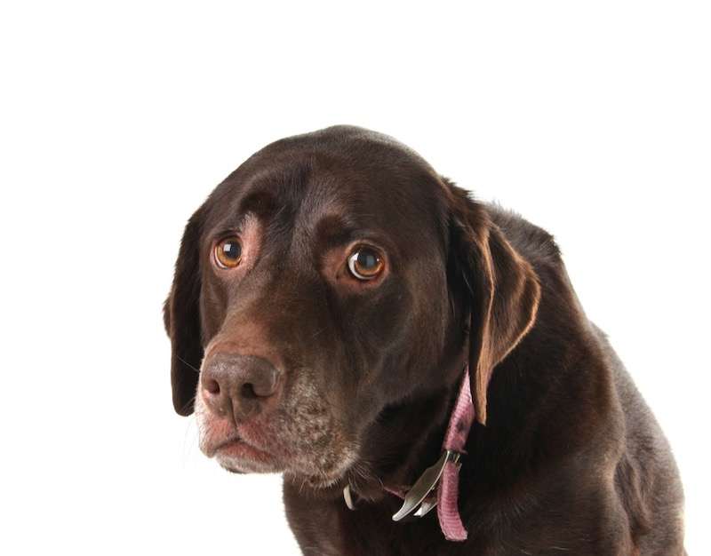 What to do About Dog Anxiety