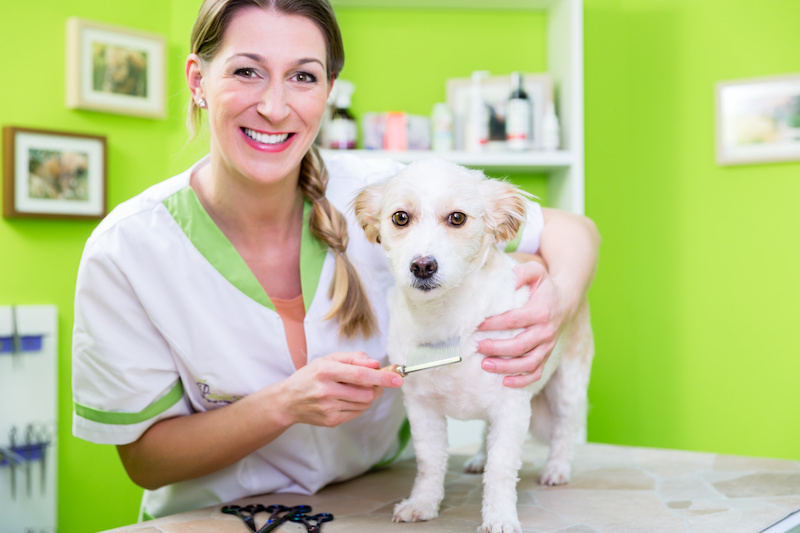 How to Get Rid of Your Dog's Fleas with a Flea Comb