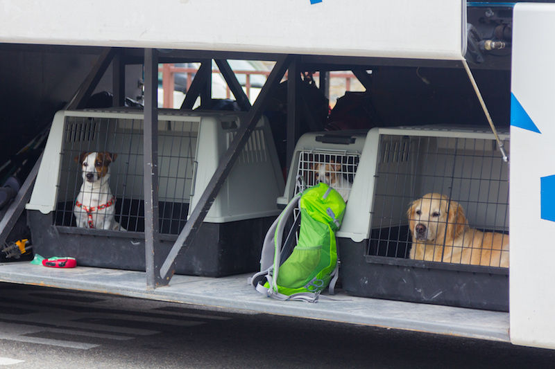 Dogs in Kennel Awaiting Airplane Flight