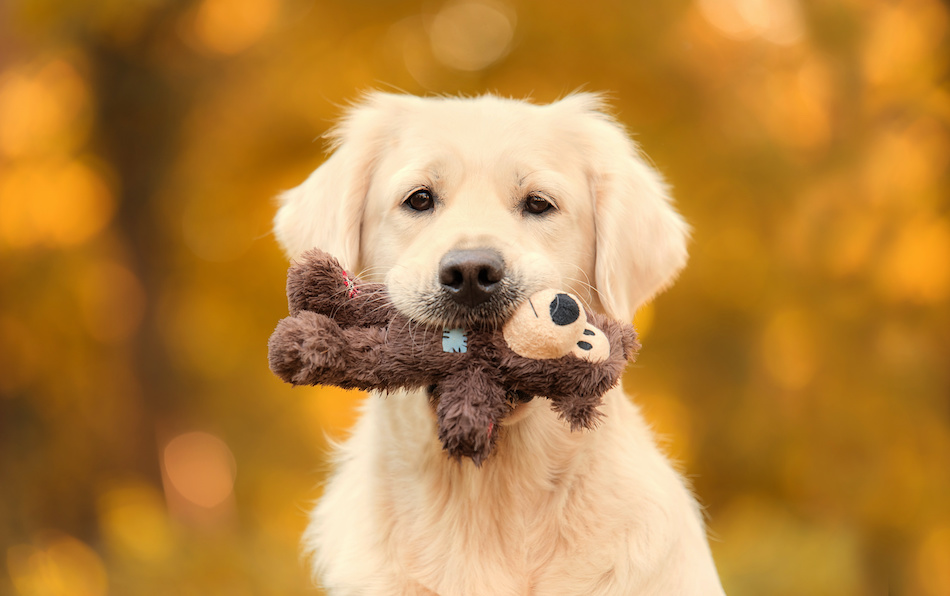Dangerous Toys to Avoid Giving Your Dog